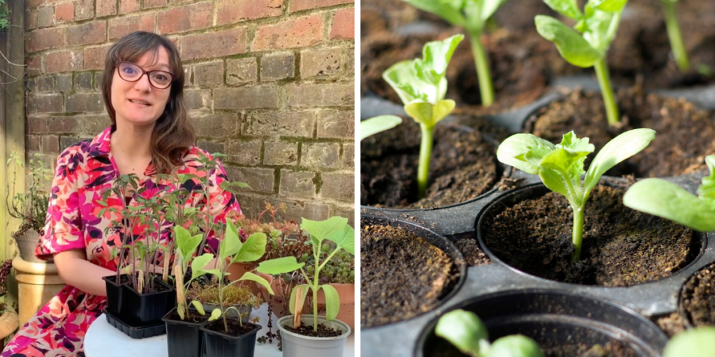 PLANTING OUT – FOOD GROWING TIPS